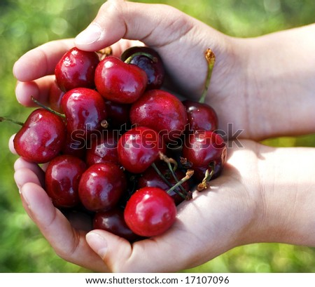 a hand full of cherries