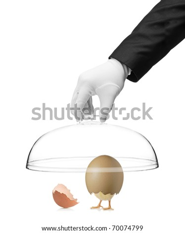A hand holding a cover over a baby chicken in cracked egg isolated on white background