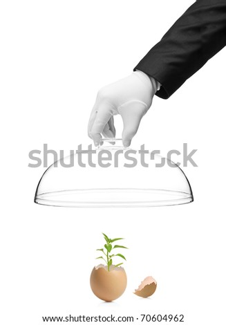 A hand holding a cover over a green plant in cracked eggshell isolated on white background
