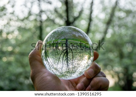 A hand holding a crystal ball for optical illusion. Known as an orbuculum, is a crystal or glass ball and common fortune telling object. Performance of clairvoyance and scrying #1390516295