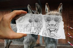 A hand holding a piece of paper in front of two donkeys, the paper has a caricature drawing of two different expressions for the animals, one smiling the other pulling a funny face