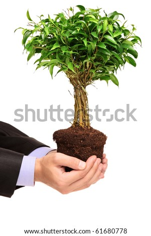 A hand holding a plant Ficus Benjamin (ficus benjamina natasja) isolated on white background