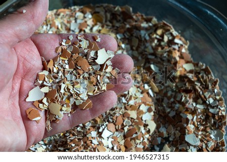 A hand holding crushed eggshells. The shells have been baked, then crushed. Crushed eggshells have a variety of uses. Concepts of nutrition, farming, gardening Stock foto ©