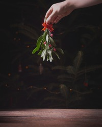 A hand holding mistletoe over christmas tree with place for your text