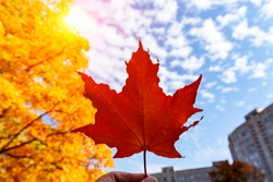A hand is holding a red leaf of maple against the background of the autumn sky