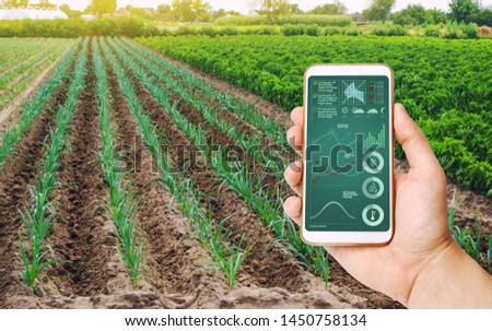 A hand is holding a smartphone with infographics on the background of field of young green leek plantations. innovative technologies, data analyzing on plants status. Growing vegetables, Agribusiness #1450758134