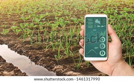 A hand is holding a smartphone with infographics on the background of leek and young cabbage plantations. Growing vegetables on the farm, harvesting for sale. Cultivation and care for plantation. #1461317990