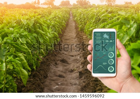 A hand is holding a smartphone with infographics on the background of plantations of sweet bell pepper. Farming and agriculture. Cultivation, harvesting. farmland. production of agricultural products