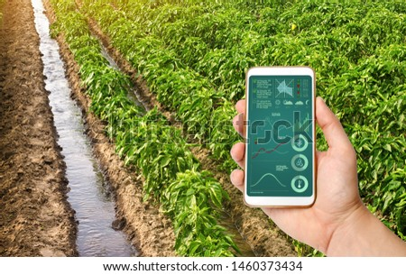 A hand is holding a smartphone with infographics on the background of traditional watering pepper plantations. Farming and agriculture. Cultivation, harvesting. Saving irrigation water in arid regions