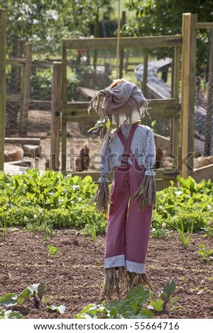 A hand made full figure scarecrow stuffed with straw and wearing a red pair of dungarees with a blue checkered shirt  and a hessian hat.
