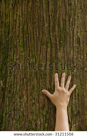 A hand, placed on the trunk of a cedar tree with fingers extended, symbolizing the connection between humans and nature. - stock photo
