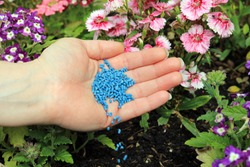 A Hand Spreading Slug And Snail Pellets To Protect Delicate Flower Borders.