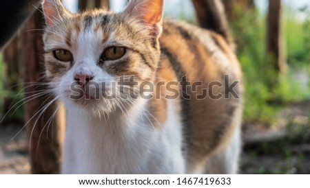 a hand stroking a cat #1467419633