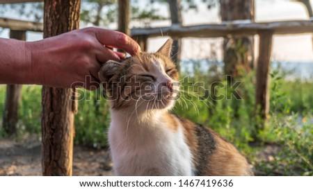 a hand stroking a cat #1467419636