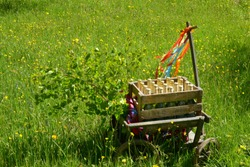A handcart with a blanket, a beer box, colorful ribbons on a wonderful spring meadow for fathers day
