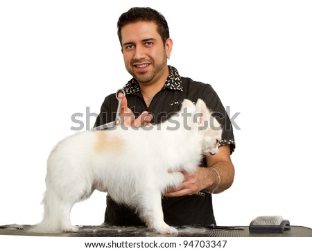 A handsome make groomer cutting the fur of a beautiful white Chihuahua dog