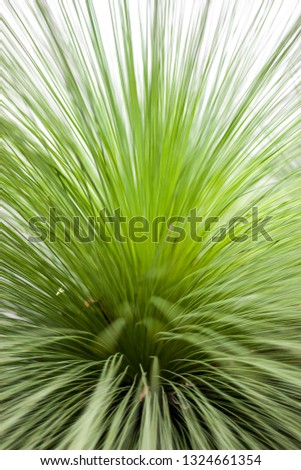 A happening indoor plant #1324661354