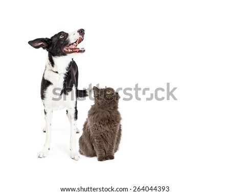 A happy crossbreed dog and a pretty gray color cat together looking up and to the side into blank copy space #264044393