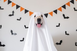 A happy dog in a ghost costume sits on a white background with bats. Halloween Golden Retriever. The concept of a scary and cheerful holiday.
