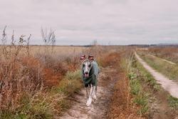 A happy dog runs along an autumn country road