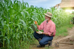 A happy elderly man who is a senior farmer using a laptop examining corn leaves and conducting research in a corn field.
