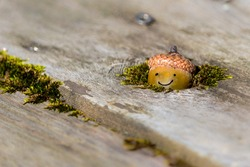 A happy little acorn person peaking out of a mossy hole. Cute little face has a smile.