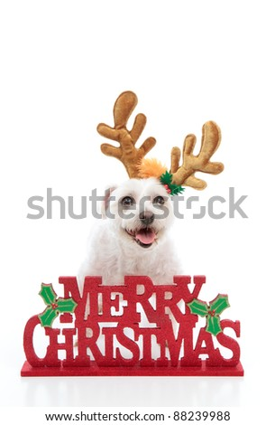A happy pet dog wearing reindeer antlers stands behind a Merry Christmas message.  White background.