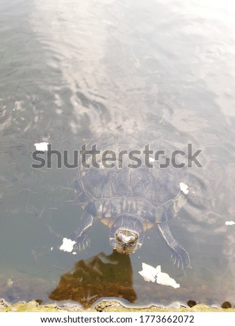 A happy turtle in the lake