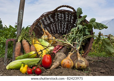 A harvest of seasnon vegetables spilling from a wicker basket