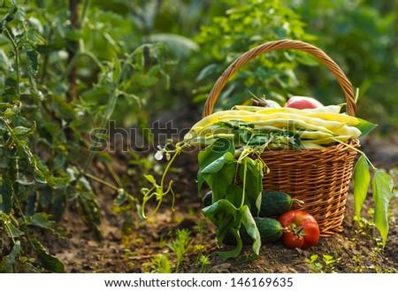 A harvest of season vegetables in a wicker basket