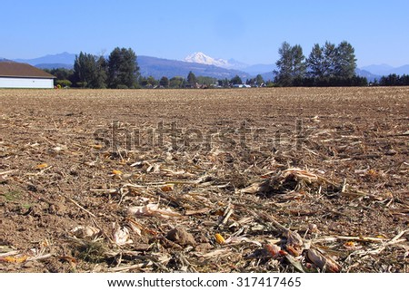 A harvested corn field in site of Mount Baker in Washington State/After the Washington Harvest/A harvested corn field in site of Mount Baker in Washington State
