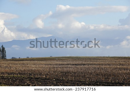 A harvested cornfield in Washington State during the winter months/Dormant Washington Winter Cornfield/A harvested cornfield in Washington State during the winter months.