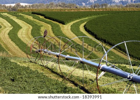 A hawk sits on top of an irrigation system in a field.