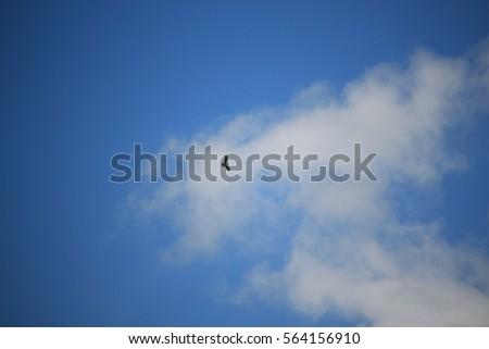 A hawk soaring high in the summer sky #564156910