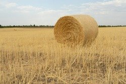 A hay roll in the middle of a dry grassland