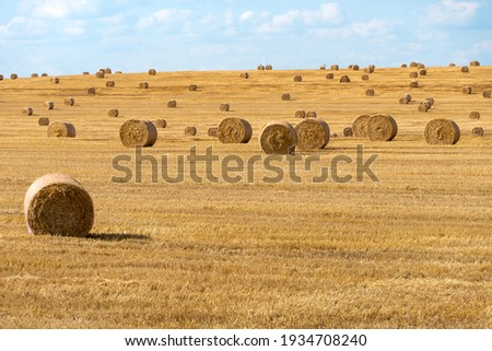 A haystack left in a field after harvesting grain crops. Harvesting straw for animal feed. End of the harvest season. Round bales of hay are scattered across the farmer's field. Stock photo ©