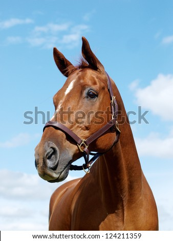 A head shot of a chestnut horse against the sky
