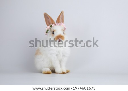 A healthy lovely white bunny easter rabbit stand up on two legs on white background. Cute fluffy rabbit on white background Lovely mammal with beautiful bright eyes in nature life.Animal concept.