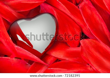 A heart on flower leaves