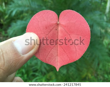 A heart shaped red leaf in hand, symbolizing love for the environment #241217845