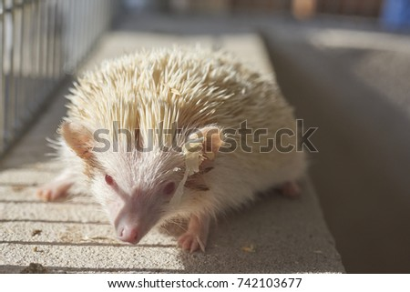 A hedgehog is any of the spiny mammals of the subfamily Erinaceinae, in the eulipotyphlan family Erinaceidae. #742103677
