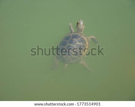 a hello from a turtle in a lake