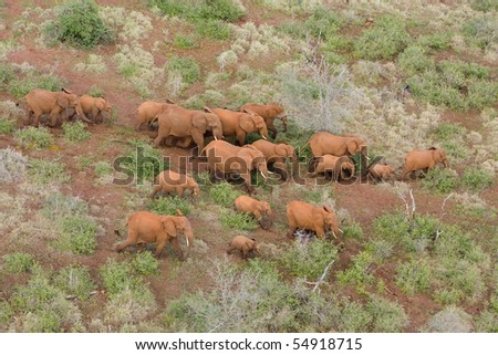 A herd of african elephants photographed form the air