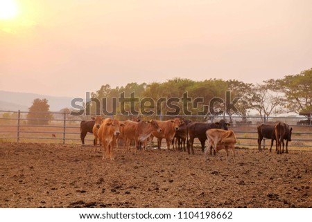 A herd of cows while they are relaxing in a cowshed.
