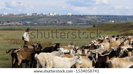A herd of goats and sheep. Animals graze in the meadow. Pastures of Europe. #1534058741