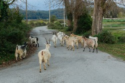 a herd of goats in the mountains