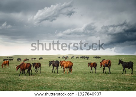 a herd of horses grazing on the plain in a thunderstorm. Landscape with animals            Stock photo ©