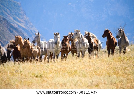 Stock Photo A herd of horses in the mountains