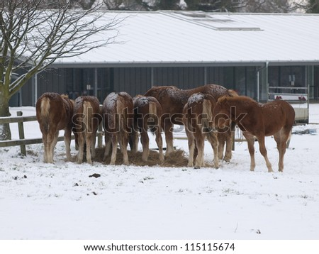 A herd of horses stand in a field in a snow storm.