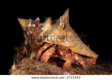 A hermit crab crawls across a ship wreck at night
